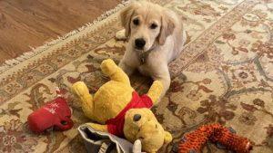 Lee más sobre el artículo Por qué una foto del perro de Pompeo se la pueden tomar como un insulto en China