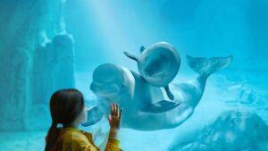 Sorprendente: las belugas forman redes sociales como los humanos
