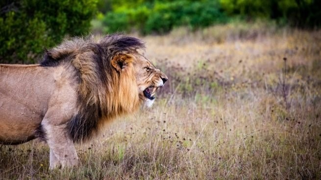 En este momento estás viendo Los 10 animales más peligrosos del mundo