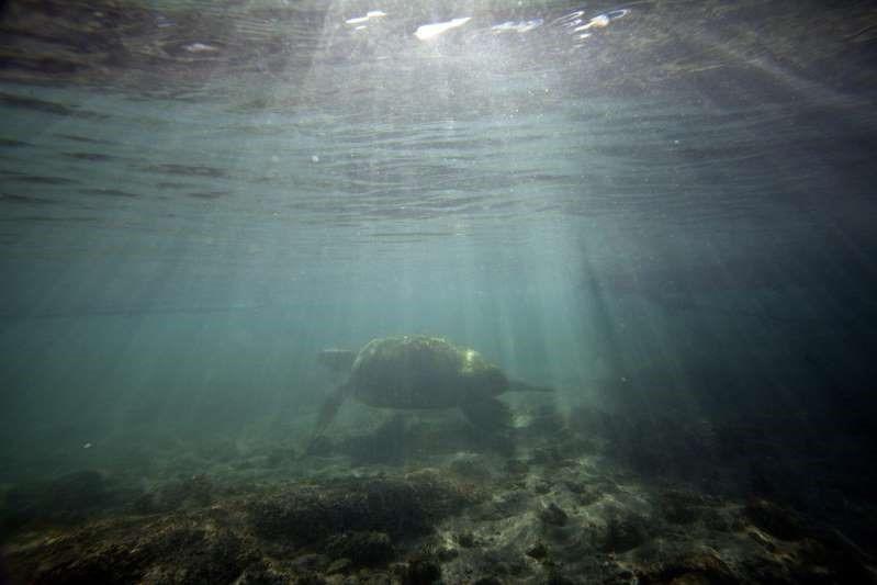 En este momento estás viendo Más de la mitad de los océanos, afectados por el cambio climático