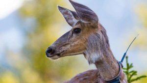 Lee más sobre el artículo ¿Por qué la tecnología puede salvar a los animales en peligro de extinción?