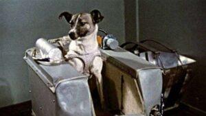 La odisea de Laika, la perrita rusa que fue pionera en la carrera al espacio