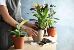 Los mejores consejos para trasplantar tus plantas sin que sufran por ello