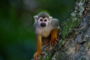 En este momento estás viendo Día Mundial del Mono