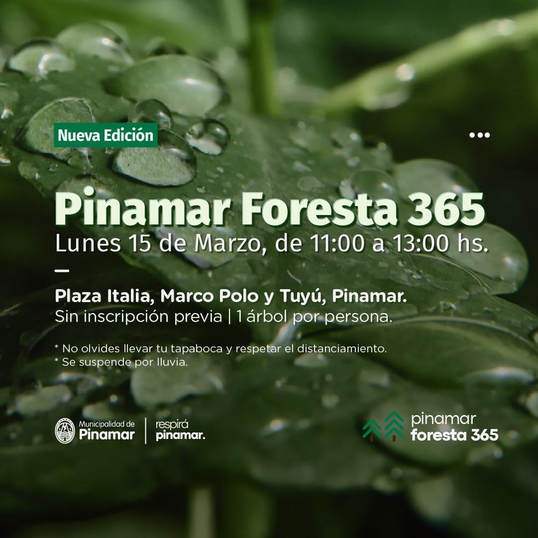 En este momento estás viendo PINAMAR FORESTA 365