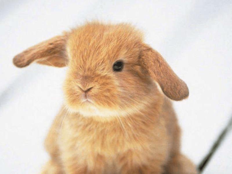 Testeo animal: Consumo consciente de maquillaje y productos de belleza
