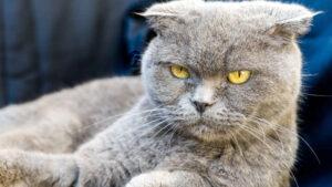 Lee más sobre el artículo Ocho cosas que los gatos odian que le hagan los humanos